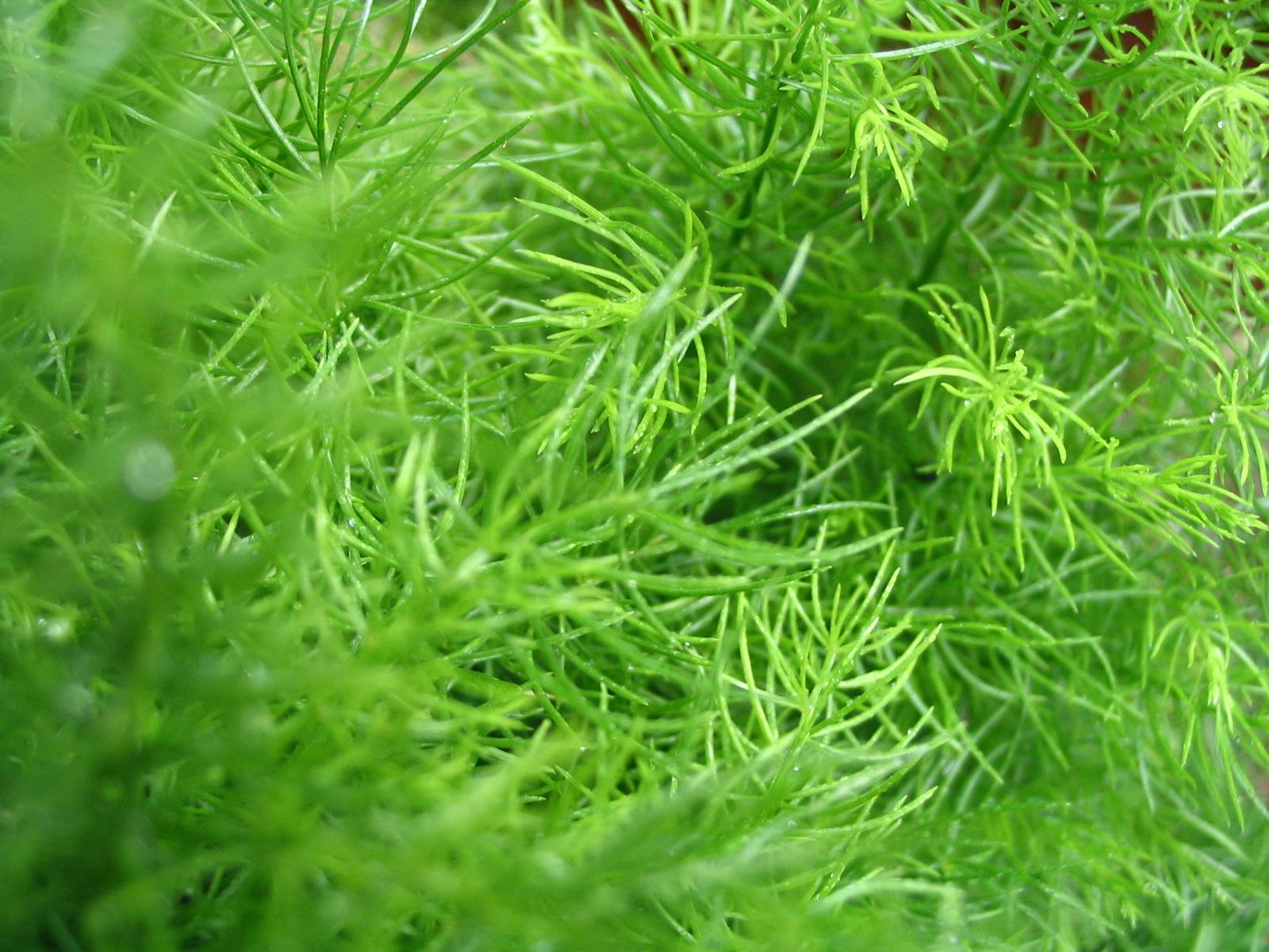 Grass+texture+free