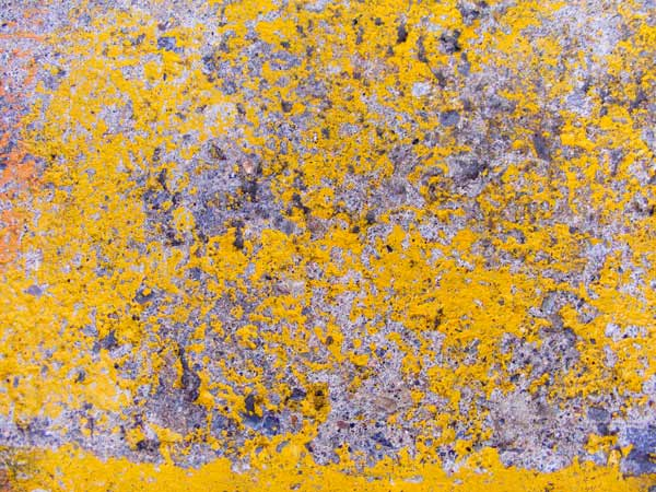 yellow concrete texture 4