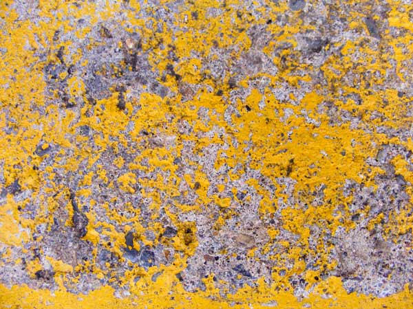yellow concrete texture 5