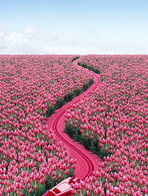 Molto-Tulip