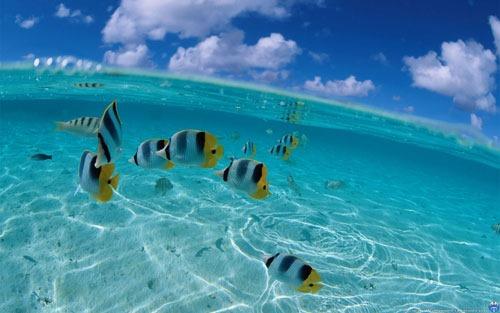 17752_water_fish_half_under_water