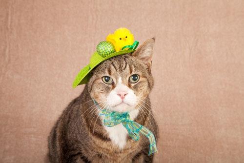 cute-cat-photo
