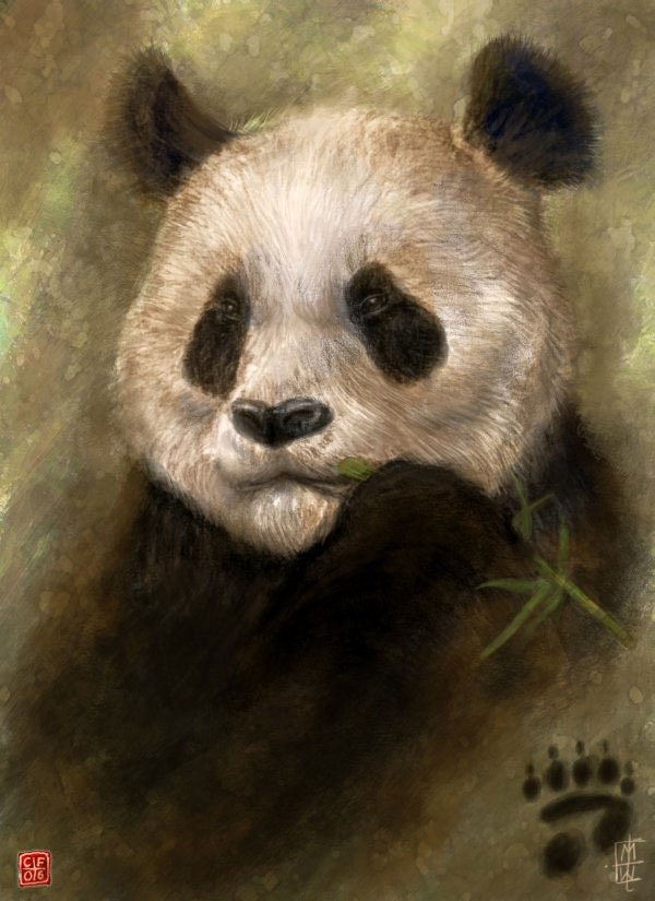 Panda_by_Thunderbird111