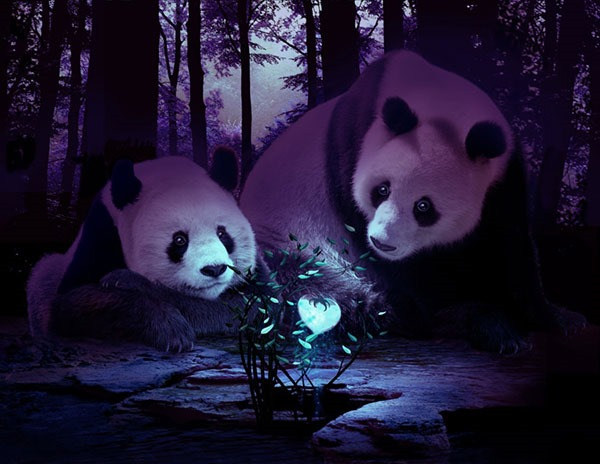 panda_lore_by_dragondew-d53ejhs