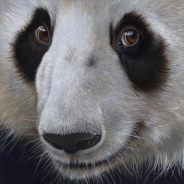 panda-bear-jurek-zamoyski